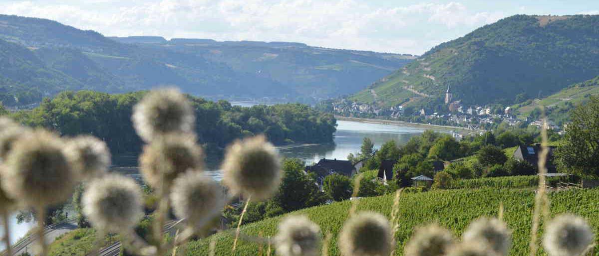 Die Rhein-Pension liegt in Lorch am Rhein gesehen von den Weinbergen Richtung Assmanshausen
