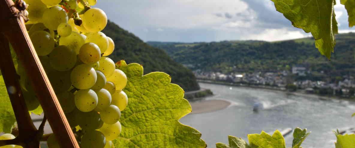 Blick auf Oberwesel im Rheintal - die mittelalterliche Perle des Rheintals ist einfach von der Rhein Pension zu erreichen
